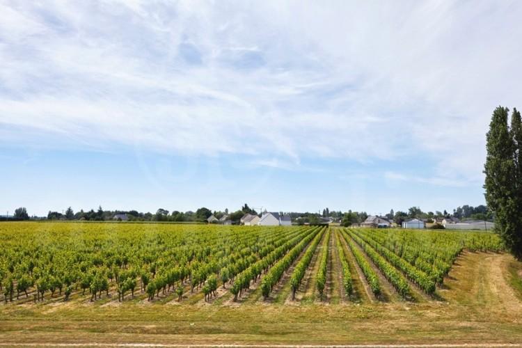 anjou-domaine-d-une-quinzaine-d-hectares-avec-potentiel-d-agrandissement (1)