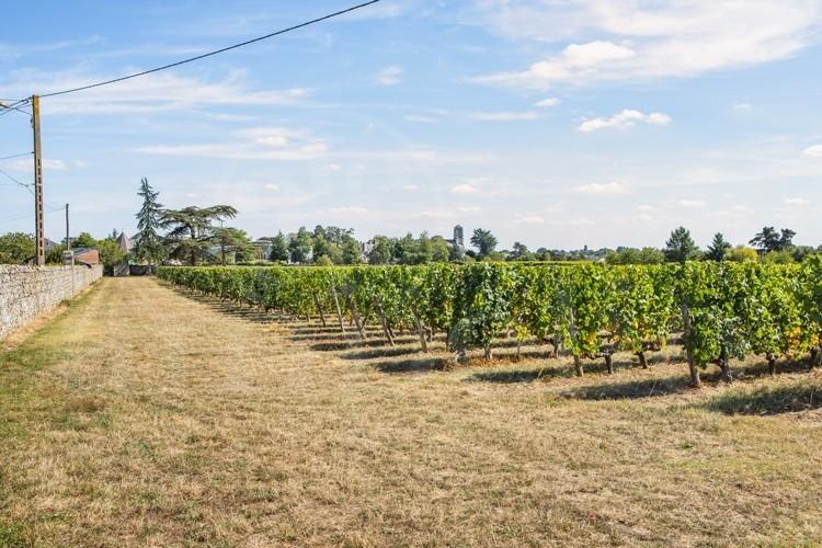 anjou-domaine-viticole-complet-de-37-ha-cle-en-mains (2)