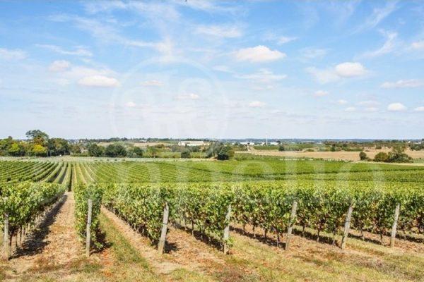 anjou-domaine-viticole-complet-de-37-ha-cle-en-mains