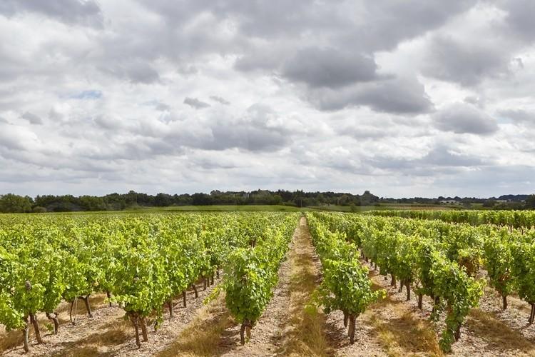 anjou-domaine-viticole-de-17ha-au-coeur-d-un-village-vigneron