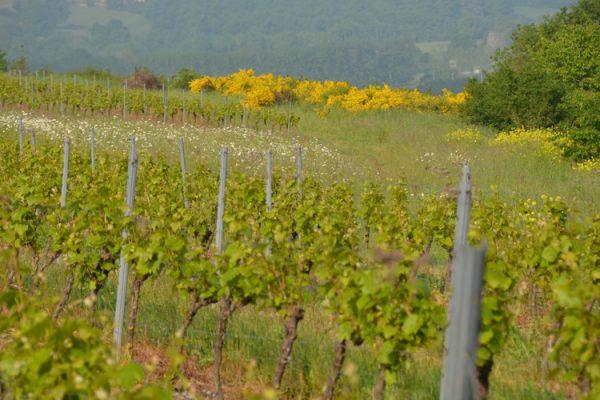 Vignoble Anjou