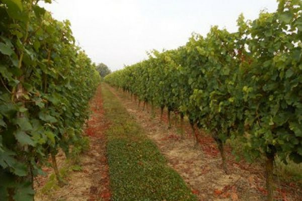 Vignoble vendu Anjou Domaine Musset (2018)