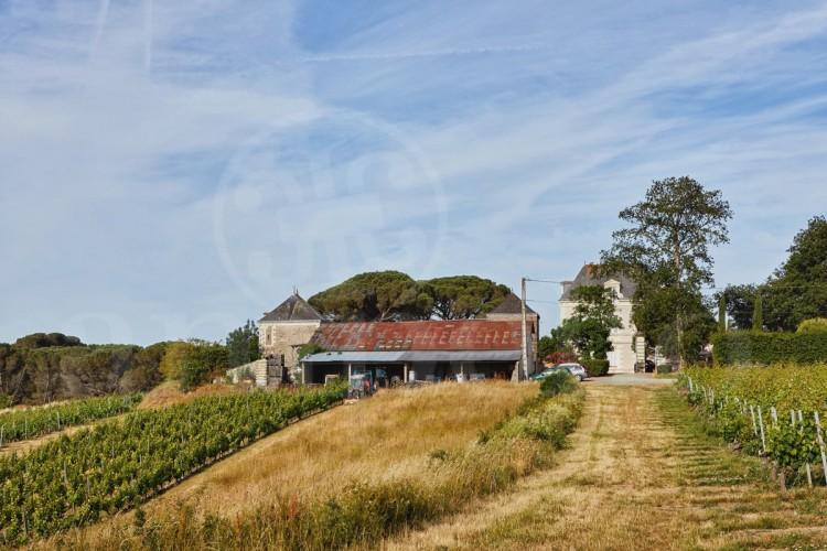 anjou-propriete-viticole-de-26-ha-au-coeur-des-coteaux-du-layon (1)