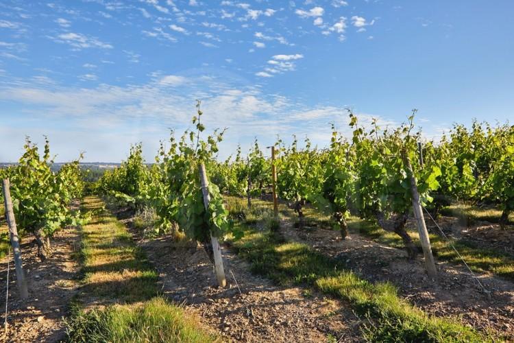 anjou-propriete-viticole-de-26-ha-au-coeur-des-coteaux-du-layon