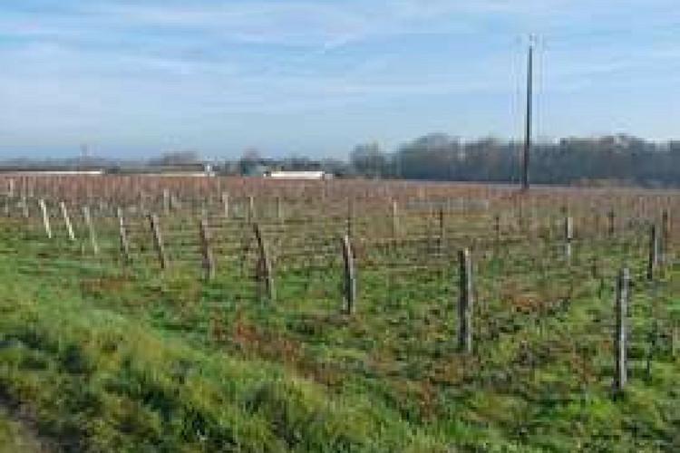 Vignoble vendu en Touraine Domaine de la Bergeonnière (2016)