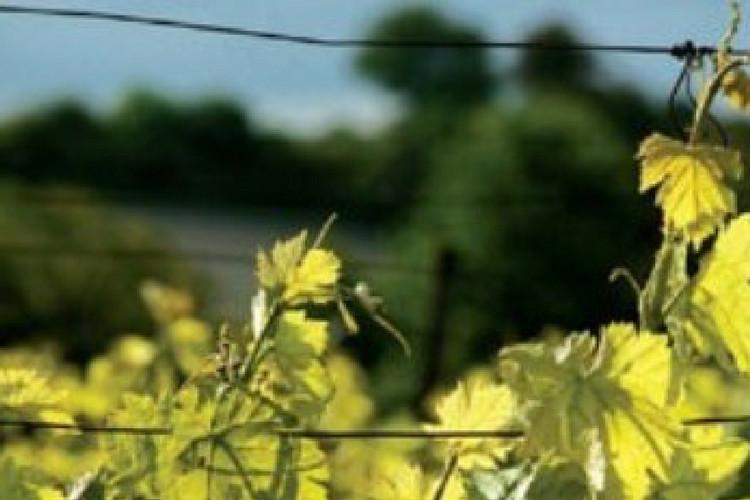 exploitation-viticole-active-au-cœur-de-l-appellation-touraine
