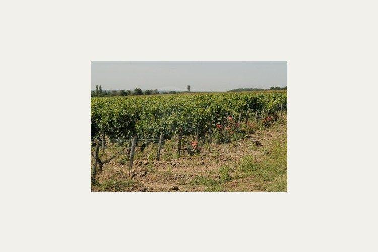 Propriété vendue en touraine Chateau Gaillard et clos de la Briderie (2016)