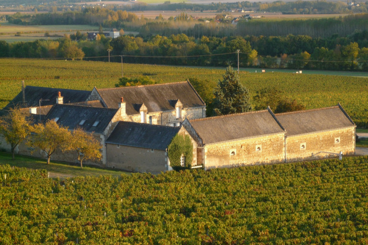 propriete-viticole-en-aop-chinon