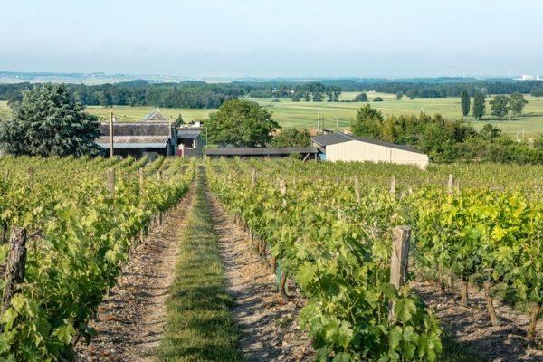 Saumur domaine viticole ref 181
