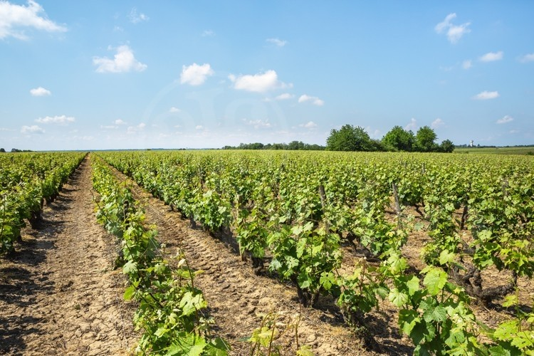 touraine-cote-loire-propriete-viticole-de-8-ha-sur-l-appellation-vouvray (3)