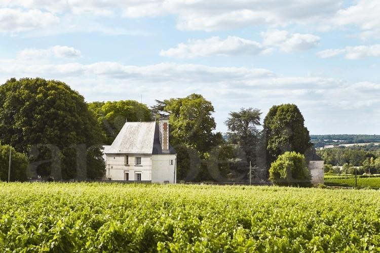 touraine-propriete-viticole-10-ha-de-vignes-autour-d-un-chateau-ismh (2)