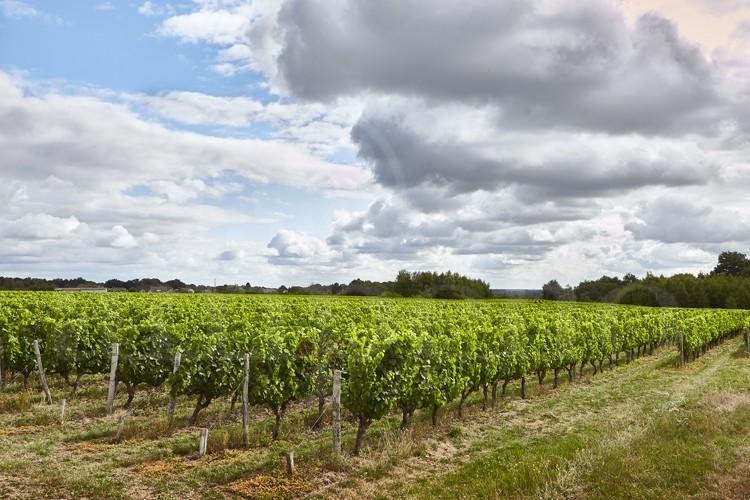 touraine-valencay-propriete-viticole-de-17-ha (3)