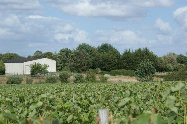 Vignoble vendu en Anjou Domaine de la Guillaumerie (2013)