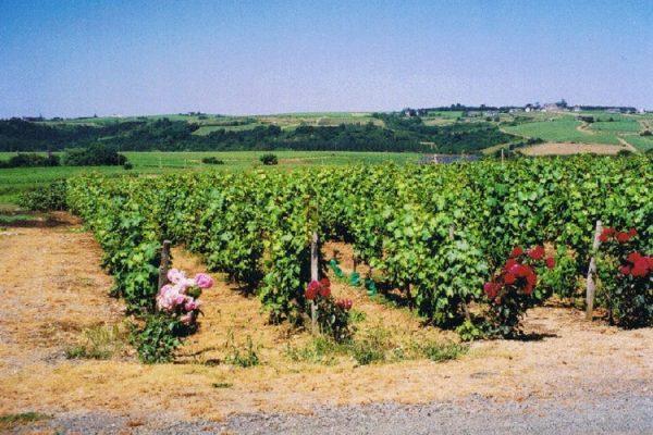 vignoble vendu-anjou-domaine-fardeau (2008)