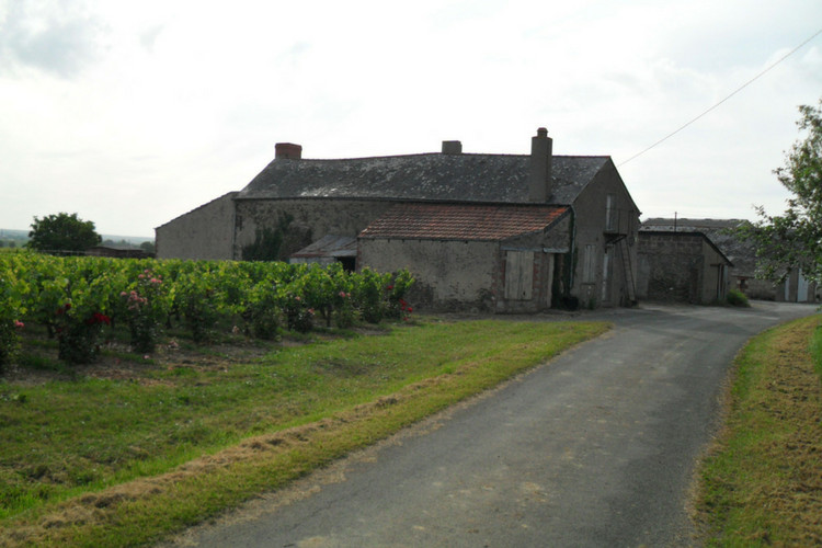 Vignoble vendu-anjou-domaine-sainte-foye (2010)