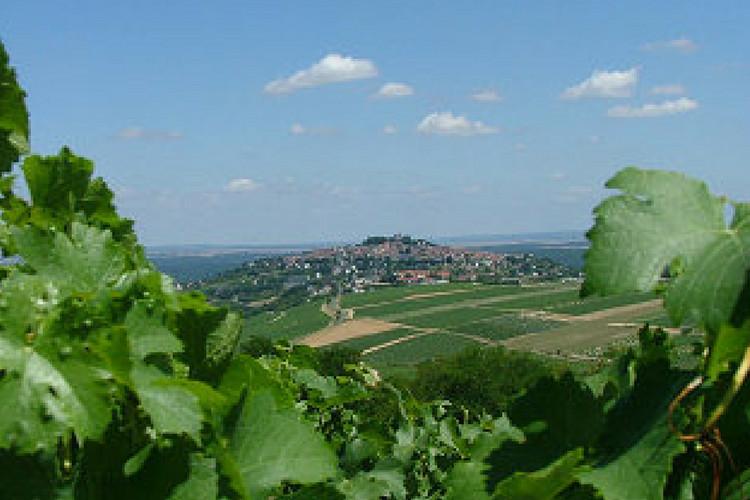 Domaine viticole vendu-sancerre andre raffaitin (2010)