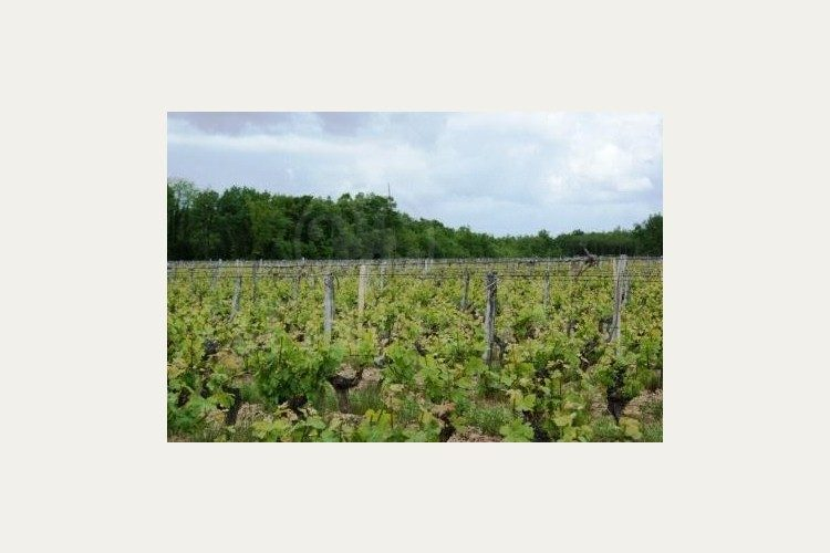 vendu-saumur-champigny-domaine-des-chalonges (2015)