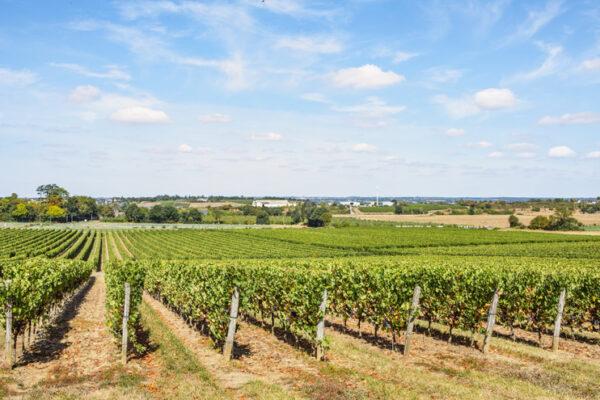vineyard pommeraye
