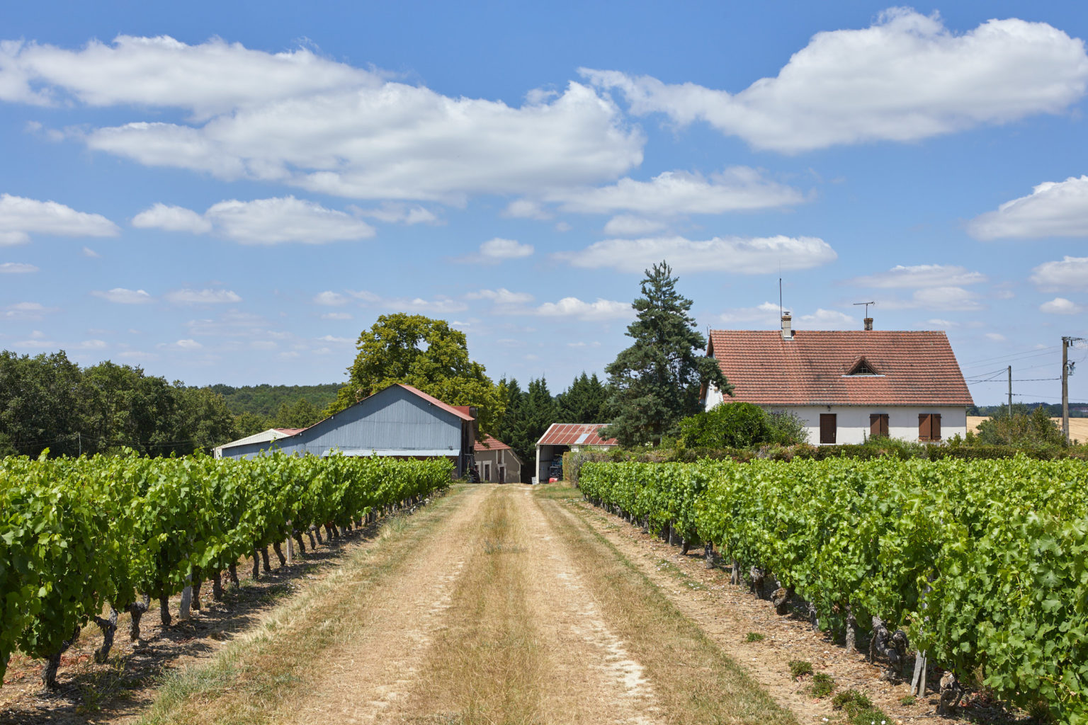 Domaine viticole Touraine ref 202