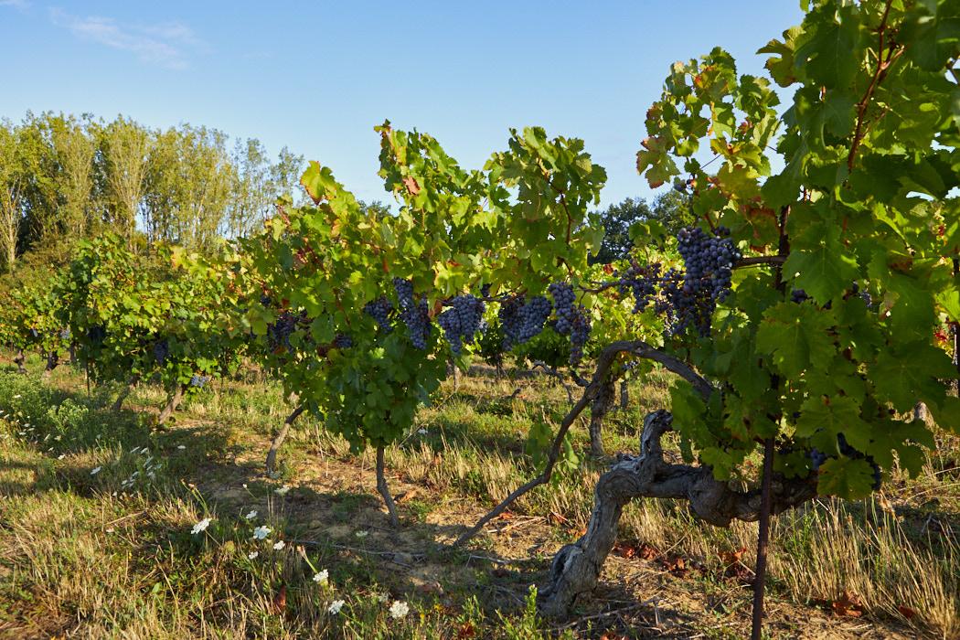 Domaine viticole Muscadet ref 208