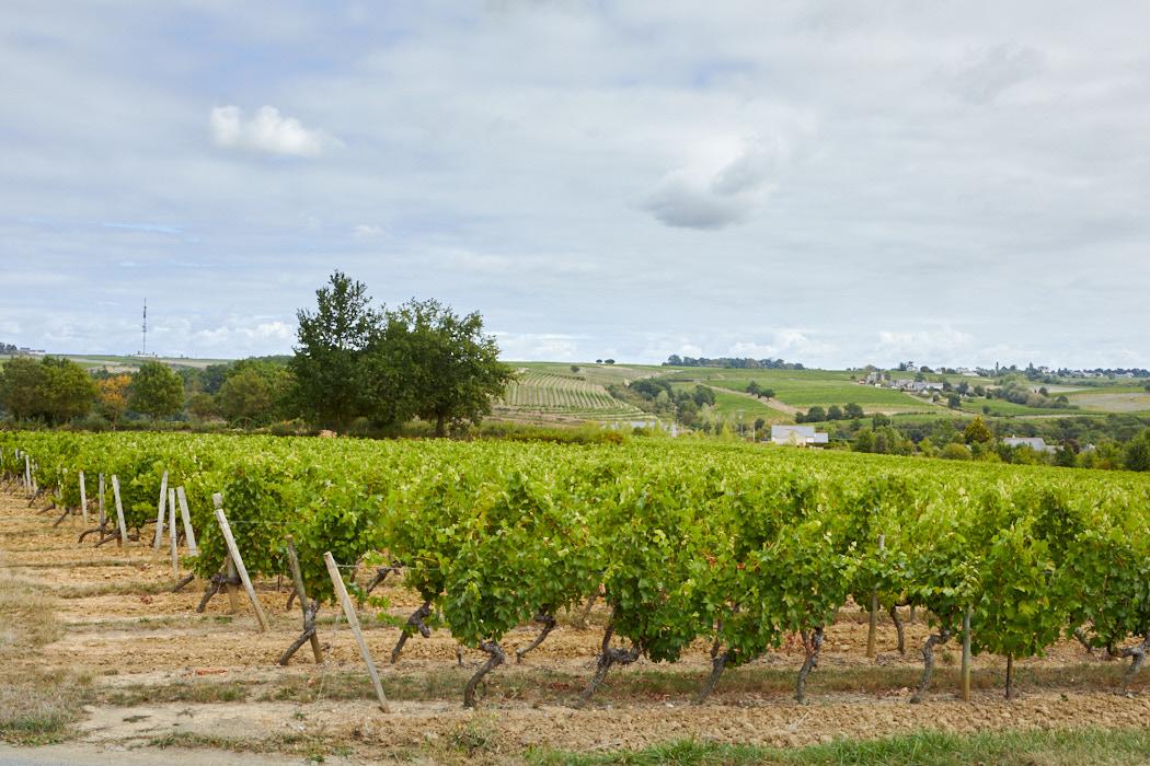 Anjou Layon vente propriété viticole de qualité