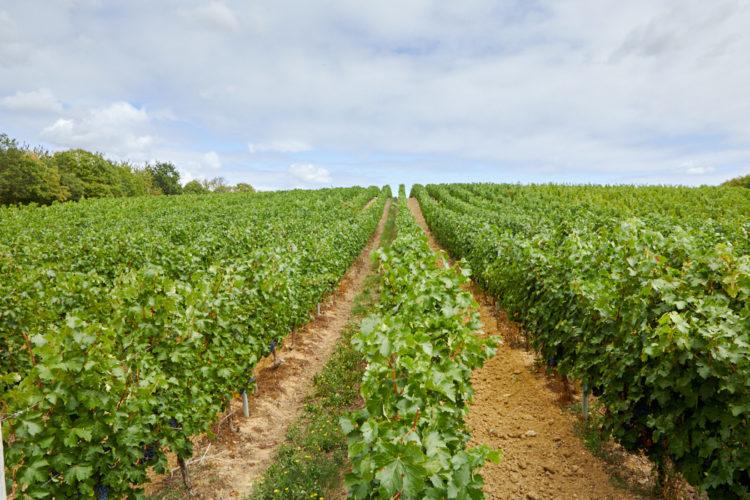 Domaine viticole Anjou ref 209