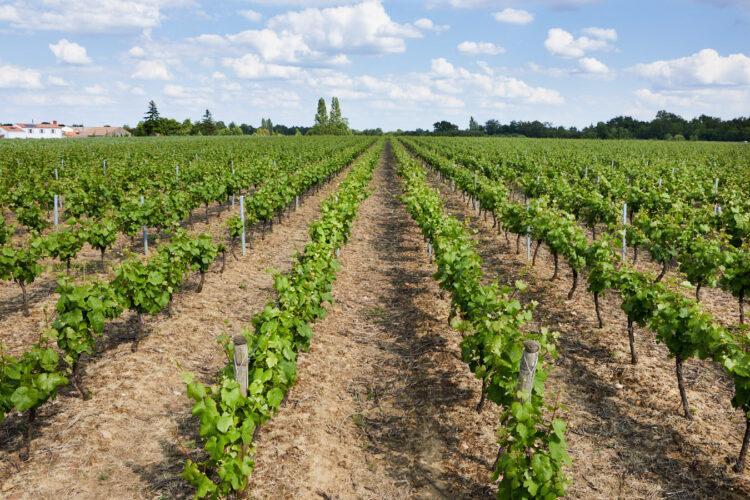 vignes 10 hectares muscadet