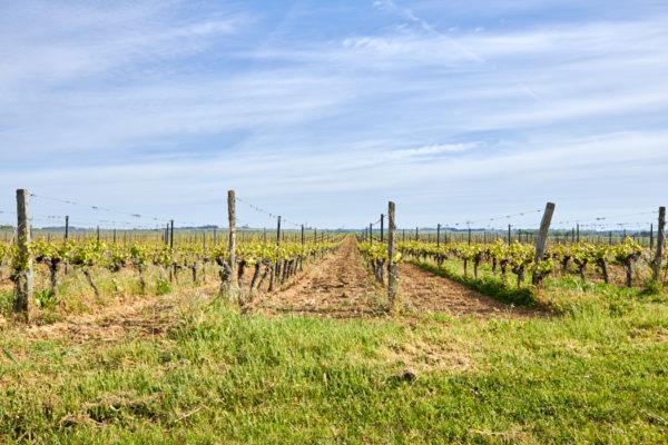 Domaine viticole Anjou ref 167