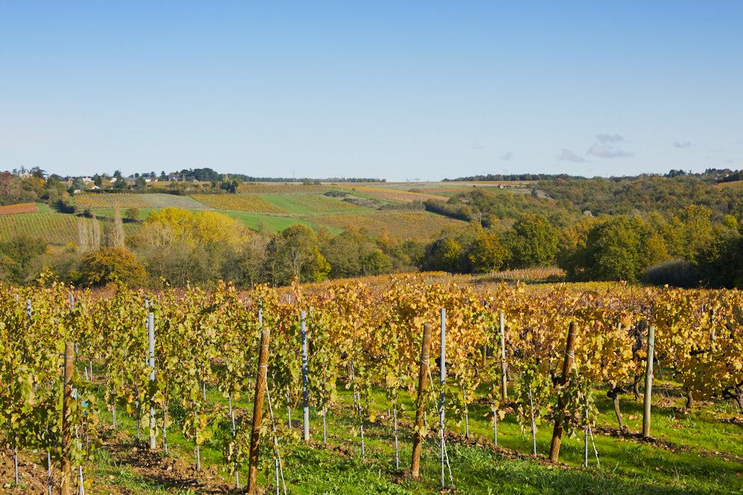 Domaine viticole Anjou ref 217 / 218