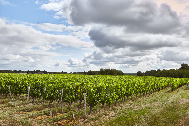 Vignoble touraine