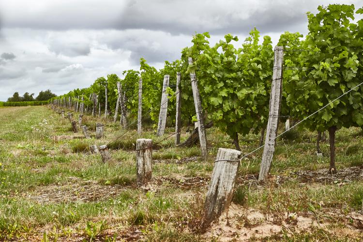 Domaine viticole Touraine ref 213