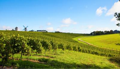 Vignoble du Val de Loire