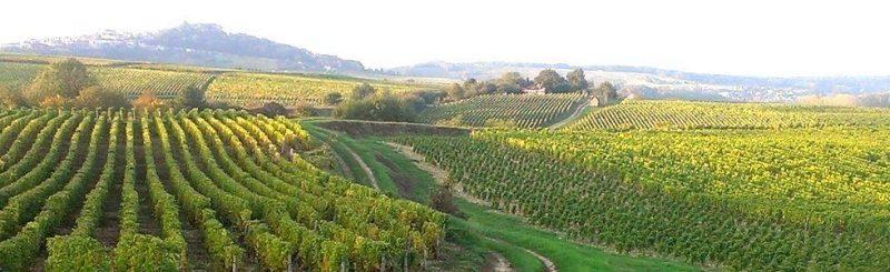 propriété viticole val de loire