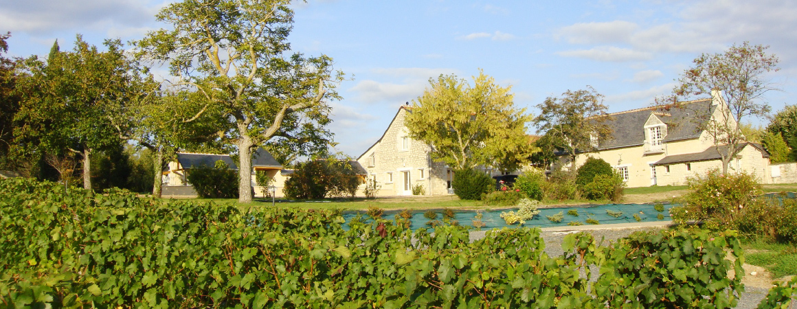 Chinon vignoble