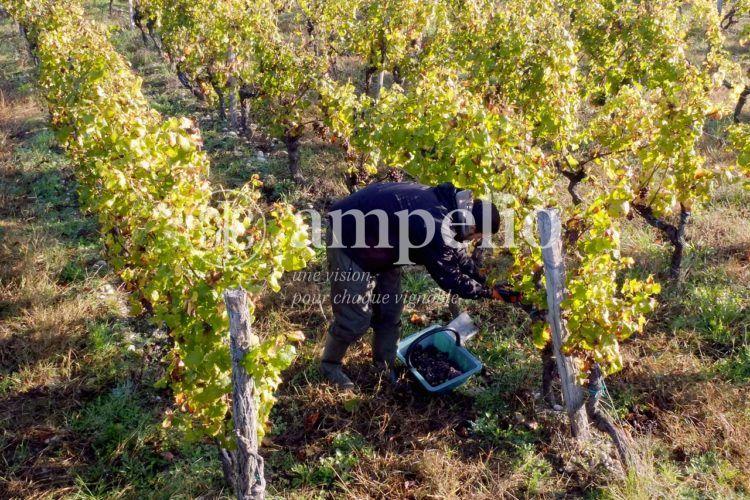 vines-2538167_1280